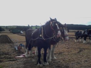 Southwell Ploughing Match and Show